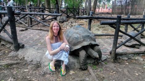 Zanzibar tartarughe