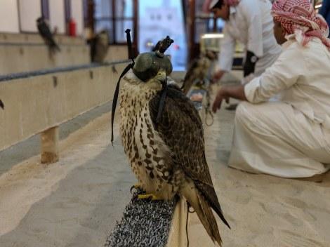 Qatar Doha falconeria