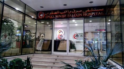 Ospedale dei falchi in Qatar a Doha
