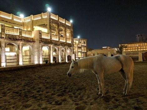 Doha cavalli arabi